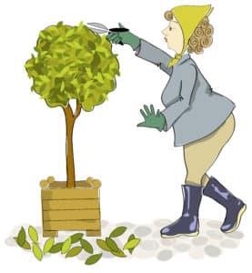 Du propriétaire ou du locataire, qui doit élaguer les arbres ?
